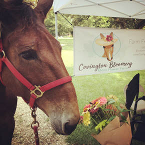 Mandy the mule at the flower stand of Covington Bloomery